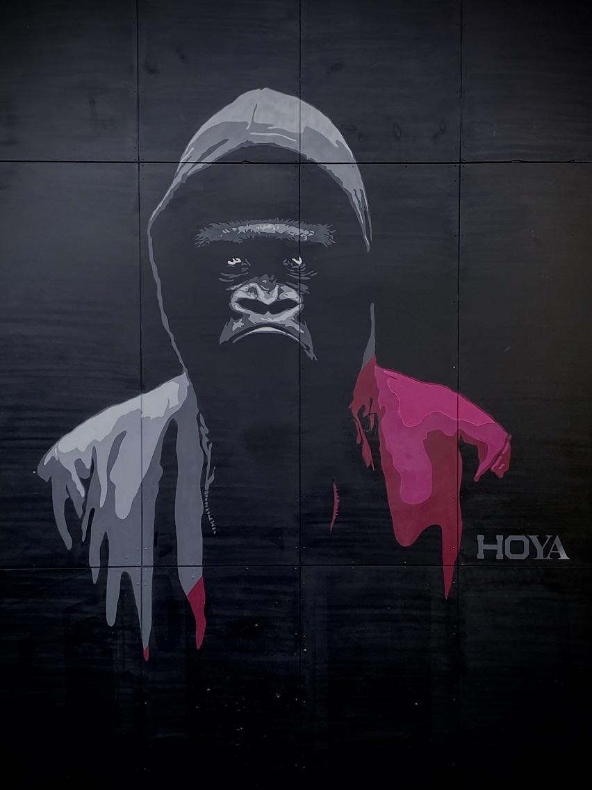 Hoya 2020